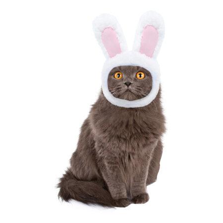 Kaninører til kat 450x450 - Udklædning til katte