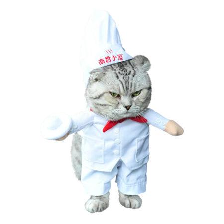 Kok udklædning til kat 450x450 - Udklædning til katte